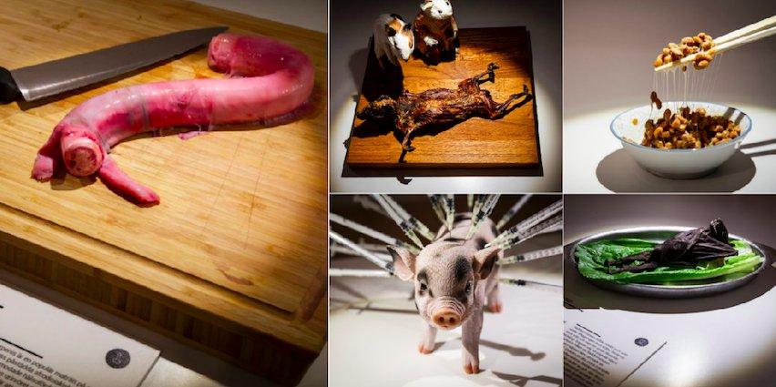 le-disgusting-food-museum-vous-ouvre-bientot-ses-portes